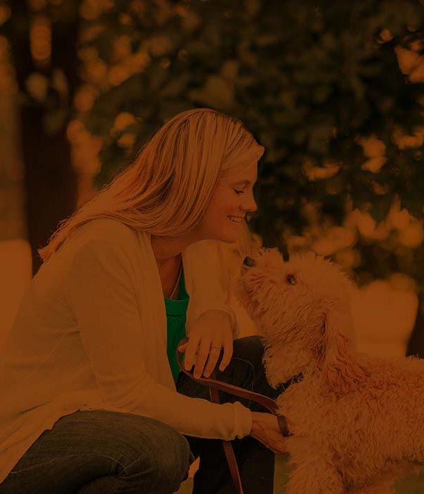Beyond the Dog Training - Website Design for business franchise