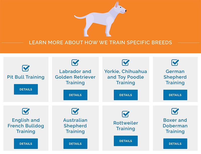 pet training website development and design